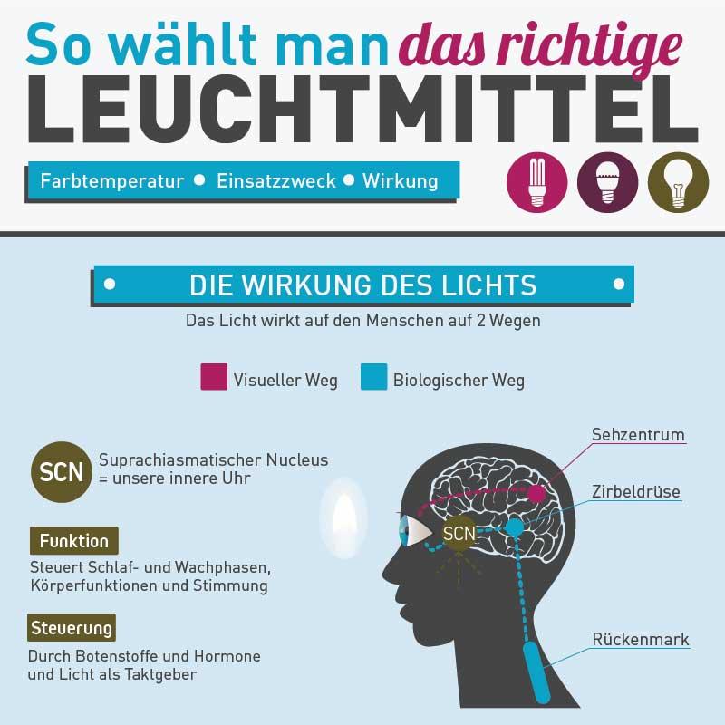 Infografik Portfolio: Leuchtmittel